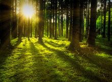 dobre wieści z lasów - biwakowanie może być legalne