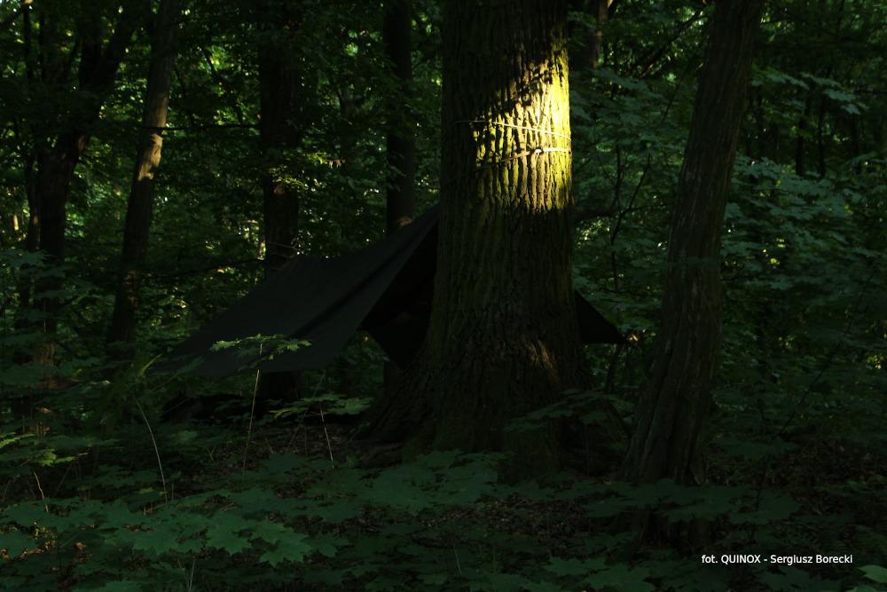 Zanocuj w lesie - stowarzyszenie Polska Szkoła Surwiwalu, bushcraft i biwakowanie w lasach