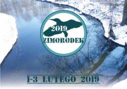 Zimorodek 2019